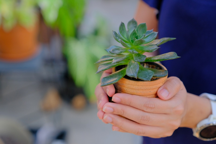 Plant in hands - web.jpg